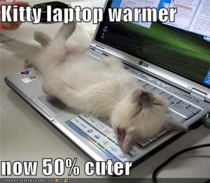 kitty laptop warmer