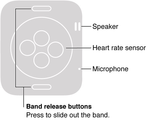 where is the microphone on the apple watch